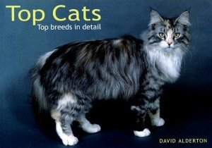 Top Cats